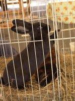 Породы кроликов и рекомендации по их кормлению