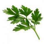 Петрушка - лечебные свойства и противопоказания, фото