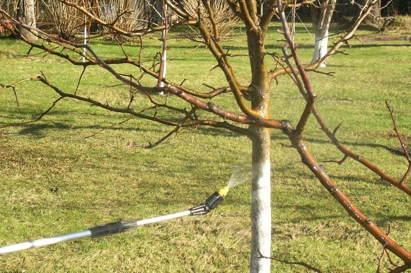 Сад: Обработка вишни