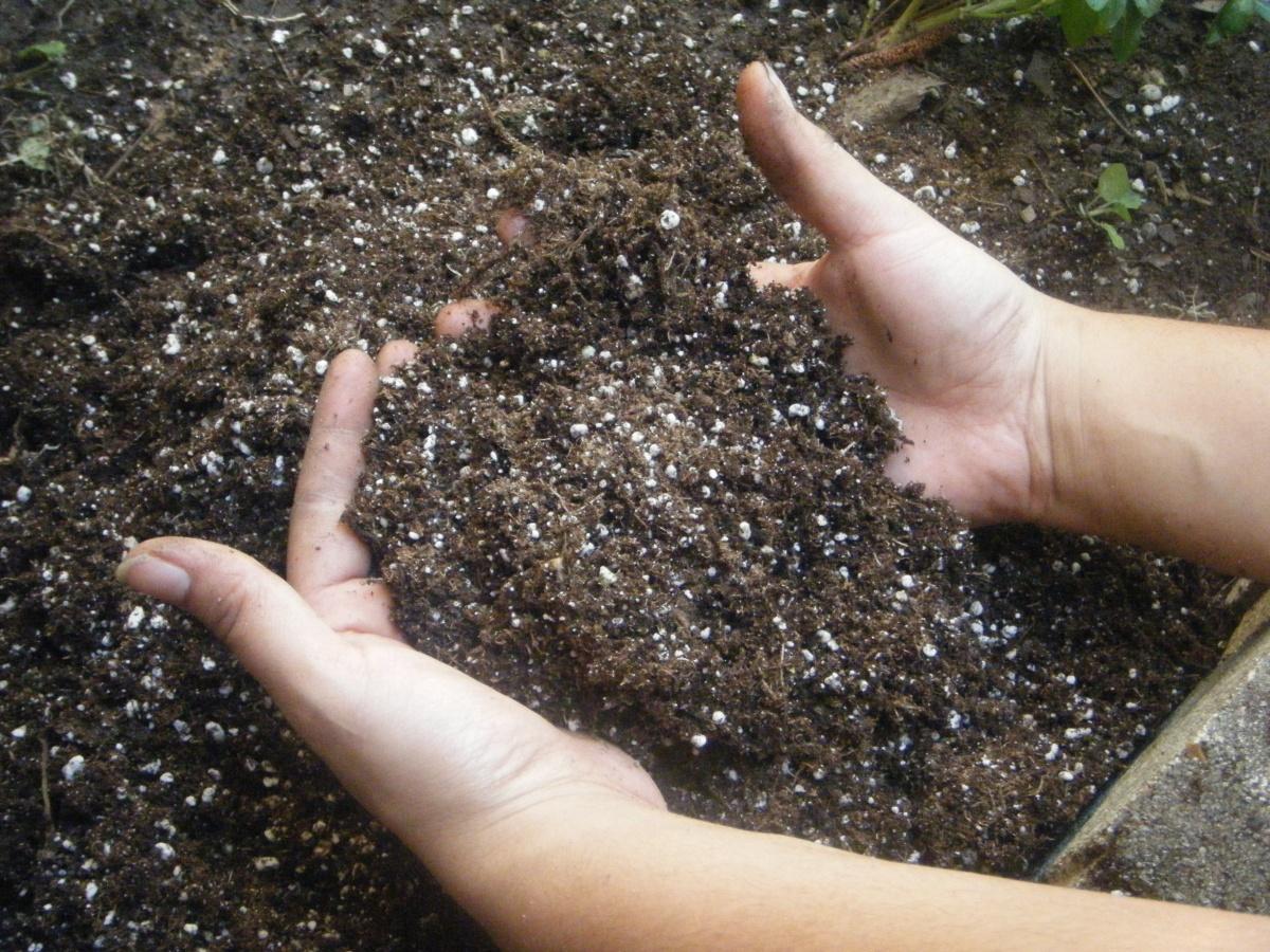 Сад: Подкормки и удобрения