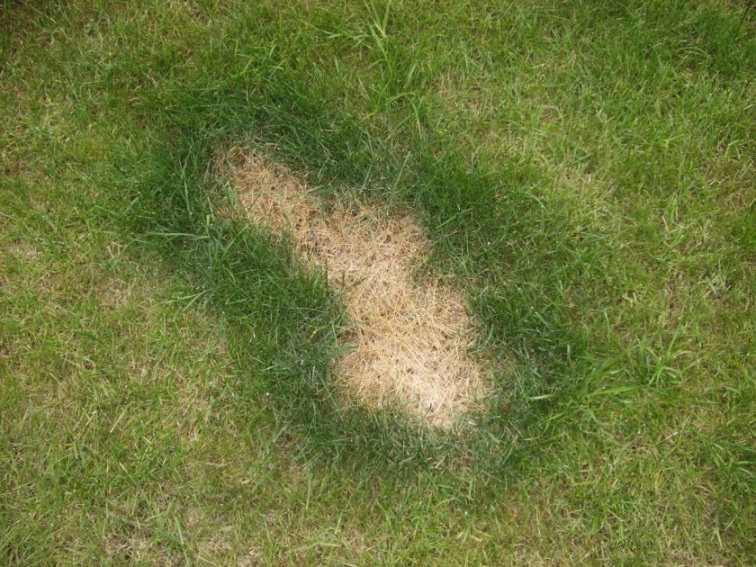 Ландшафтный дизайн: Семена газонных трав