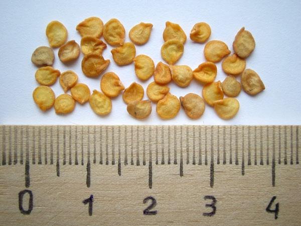 Огород: семена перца