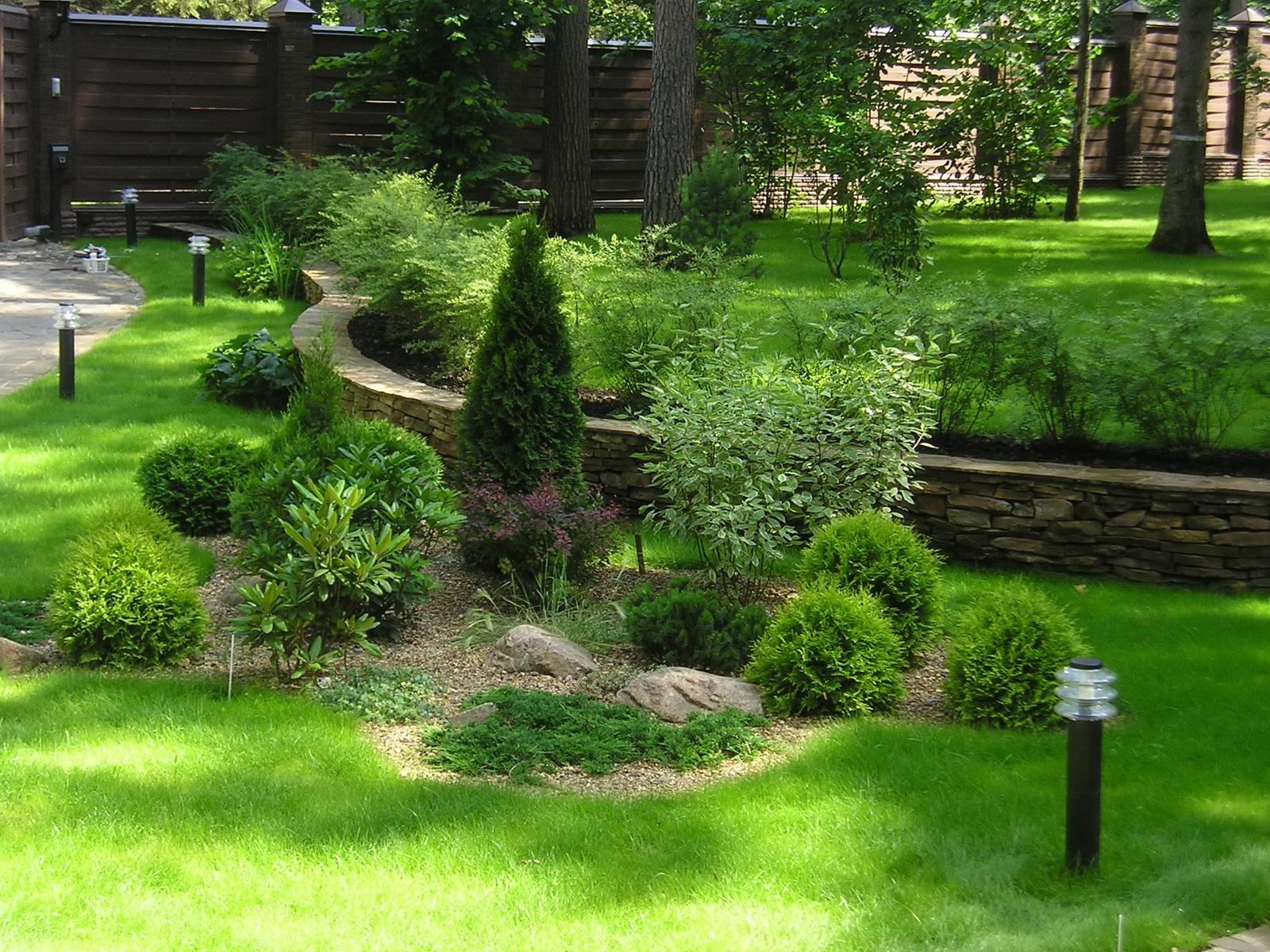 Декоративные растения: Туя на даче - посадка и уход