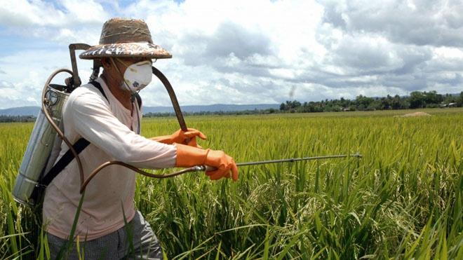 Огород: обработка лука