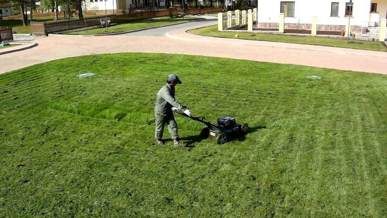 Ландшафтный дизайн: Способы стрижки газона у себя на даче