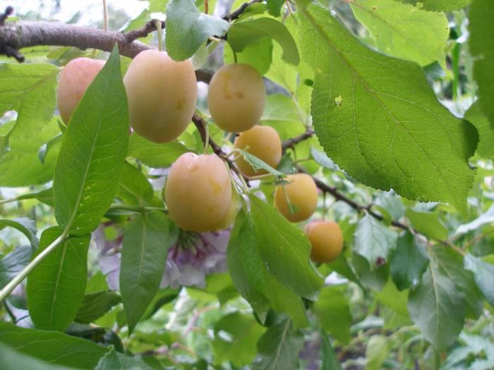 Сад: Память Тимирязева