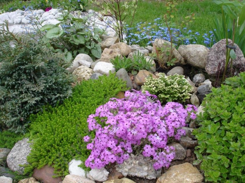 Садовый папоротник на даче: посадка и уход
