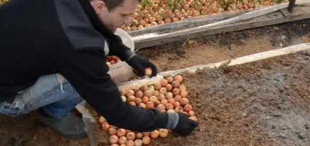 Огород: высадка лука