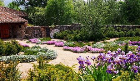 ирисы в саду дизайн фото