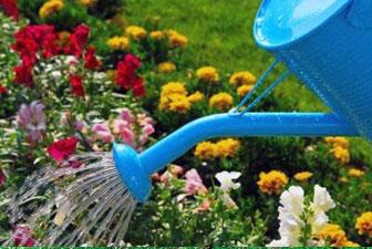 полив многолетних цветов
