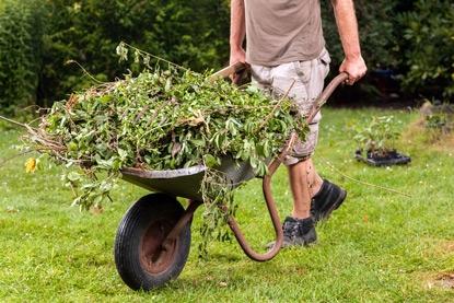 сорняки для удобрения
