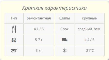 sort_maliny_gerakl_foto_opisanie