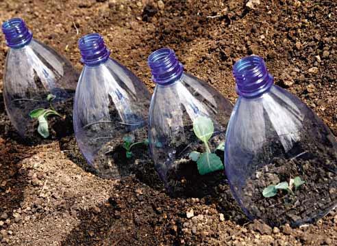 Посадка огурцов под бутылки