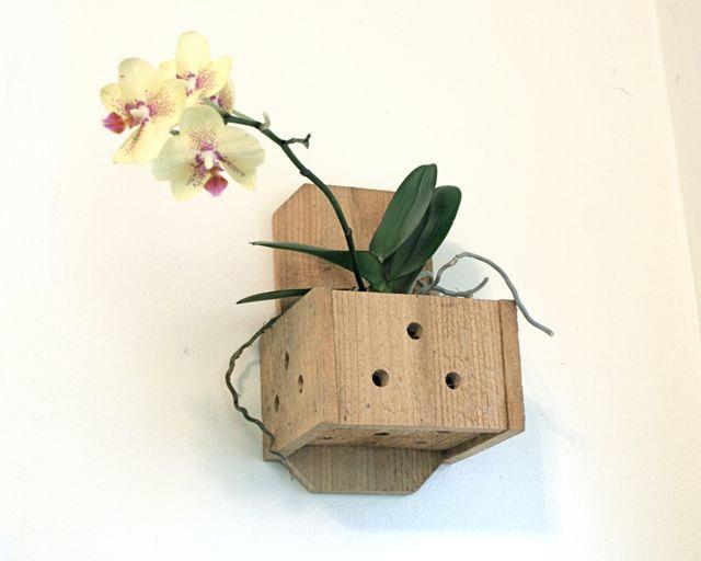 Каким должен быть горшок для орхидеи