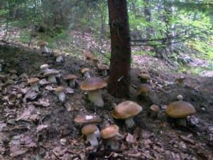 Как вырастить грибы на участке