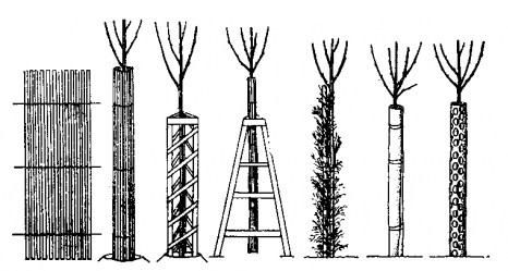 Защита древесных пород от грызунов