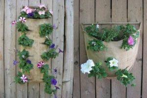 Главный минус вертикального цветника - быстрое пересыхание почвы