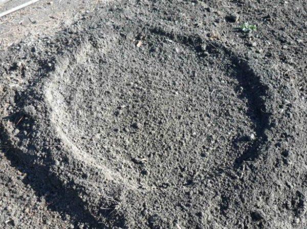 Лунка для огурцов