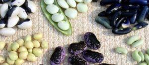 Свои семена подготовленные и проверенные не хуже покупных