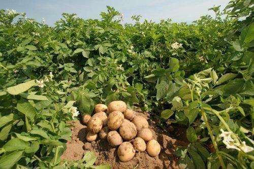 Сбор урожая в июне
