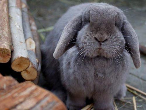 болезни кроликов и их симптомы и лечение