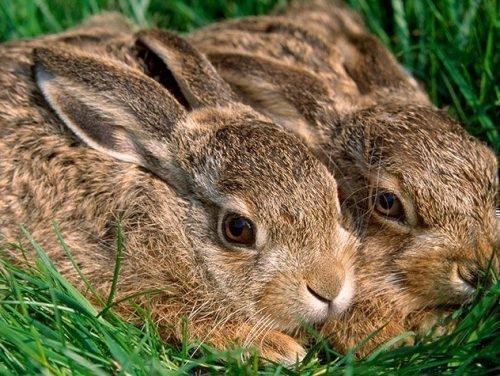 комбикорм для кроликов
