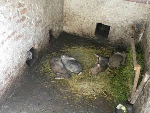 Содержание кролей в яме