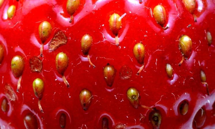 Как правильно выбрать семена клубники для посева