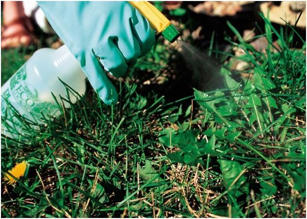 Химический способ борьбы с сорняками
