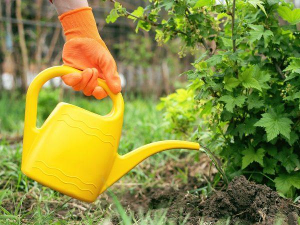 Осенью нельзя использовать азотные удобрения