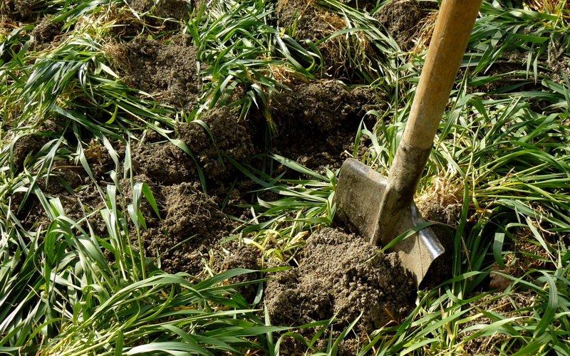 Как использовать и применять органические зеленые удобрения для почвы
