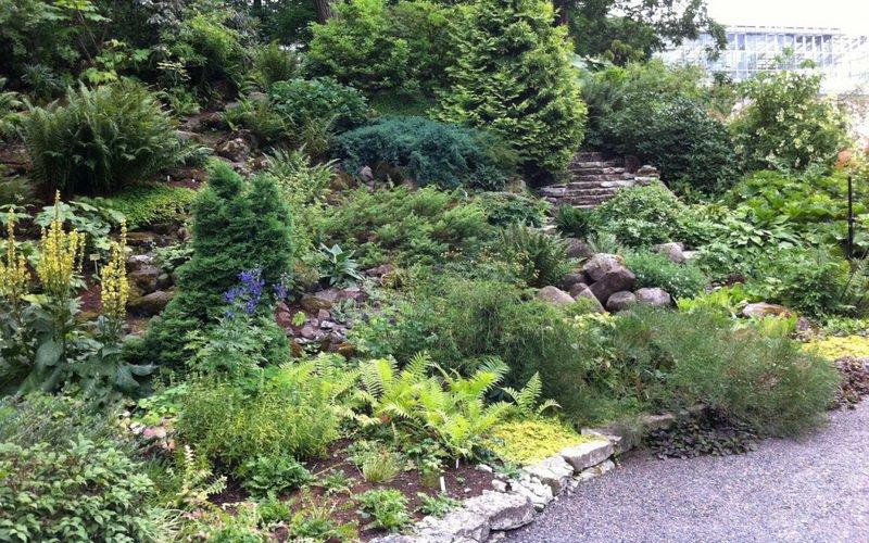 Хвойные растения и кустарники для альпийской горки: фото и названия