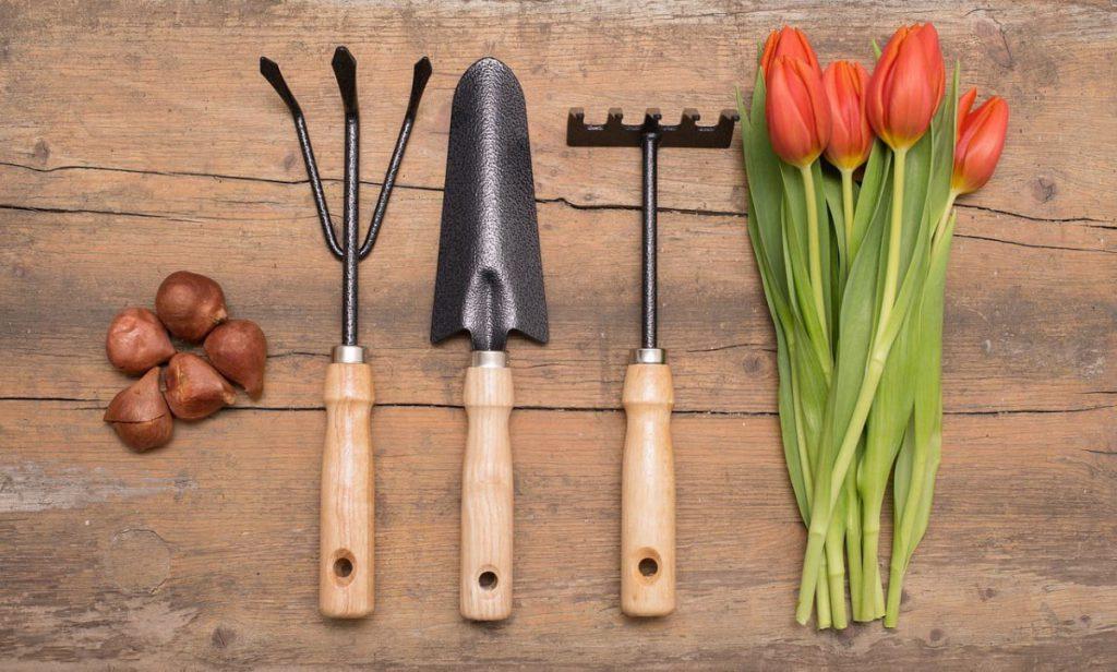 Как сажать тюльпаны весной луковицы в открытый грунт