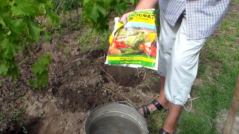 Подкормка винограда летом