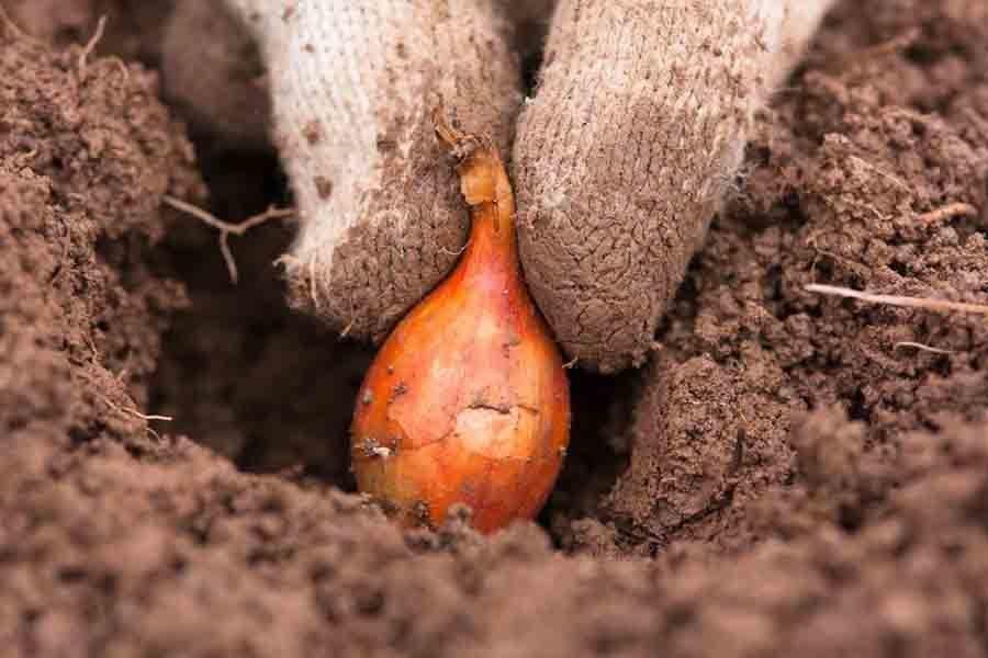Эффективные грядки - проведение подзимнего посева