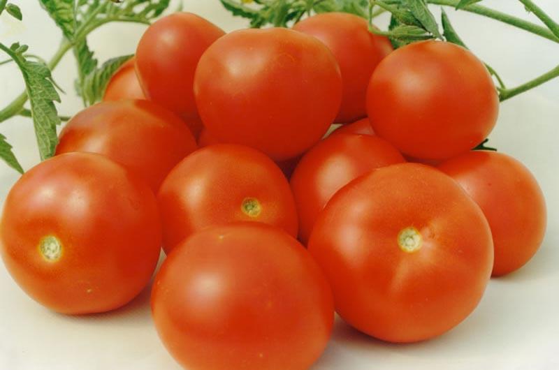 помидоры Аврора