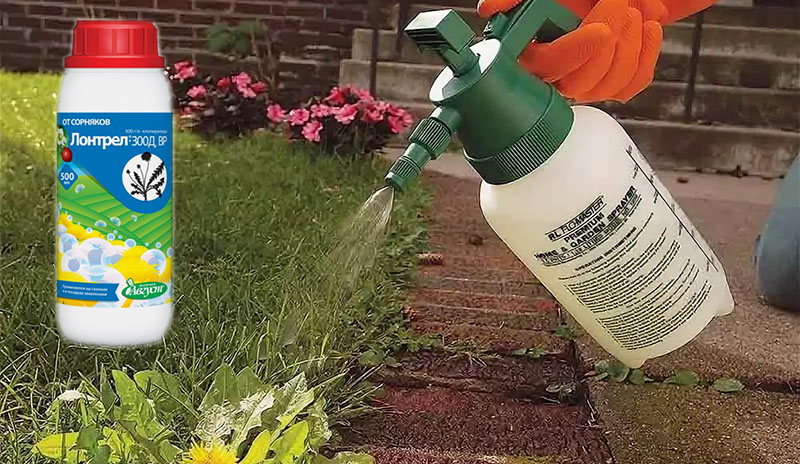 Применение гербицида Лонтрел