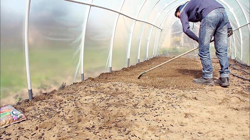 Подготовка грунта в теплице для посадки томатов