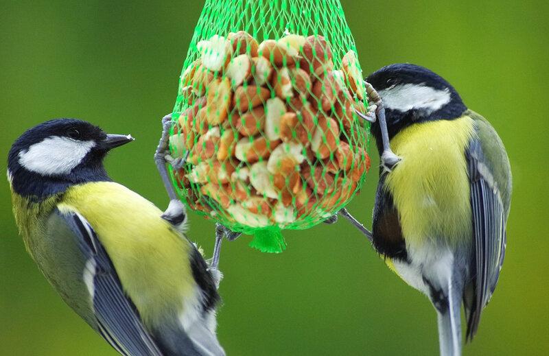 Чем подкормить садовых птиц зимой