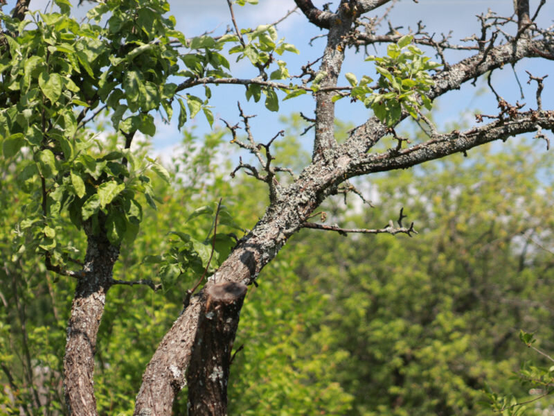 Подкормка деревьев: правила и тонкости