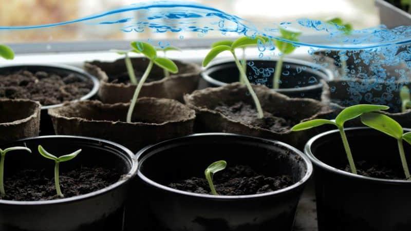 Как и чем подкормить огурцы для их рекордной урожайности