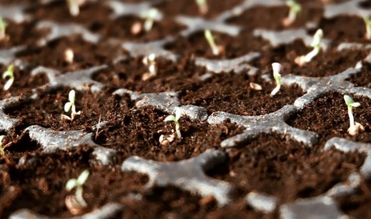 Что можно сеять на рассаду в марте