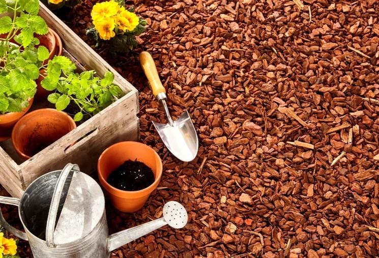 Как и зачем мульчируют почву