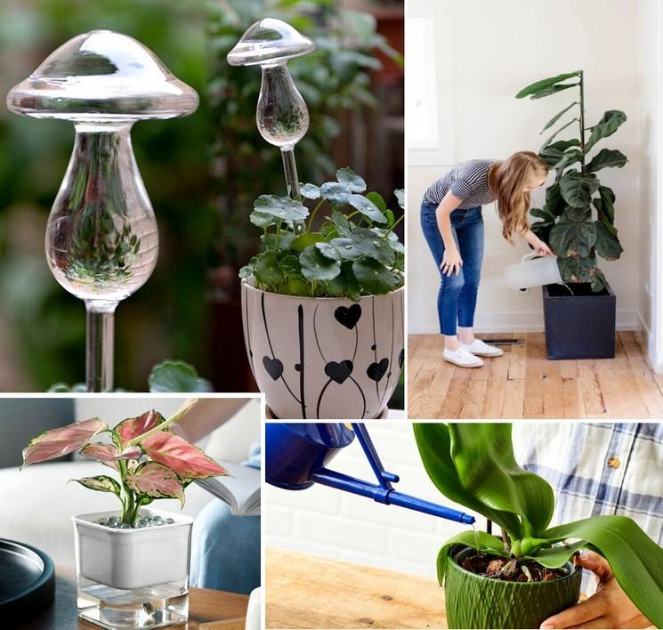 Как поливать комнатные растения и цветы