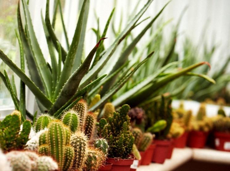 Правильное освещение для кактусов