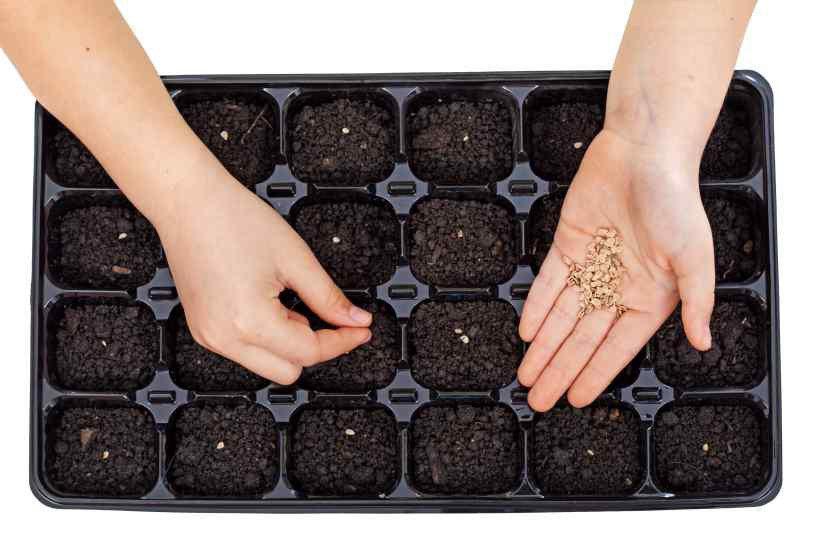 Посадка перца на рассаду в 2021 в марте по лунному календарю на Урале