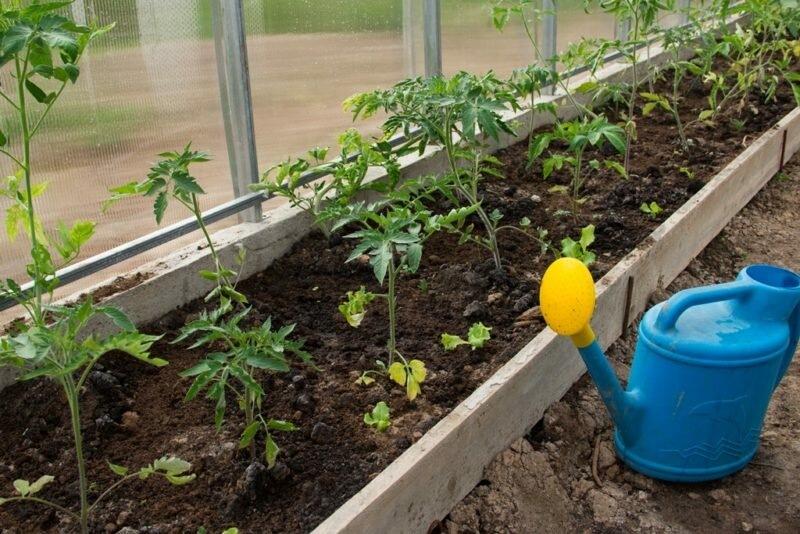 Средства первой необходимости при разведении томатов