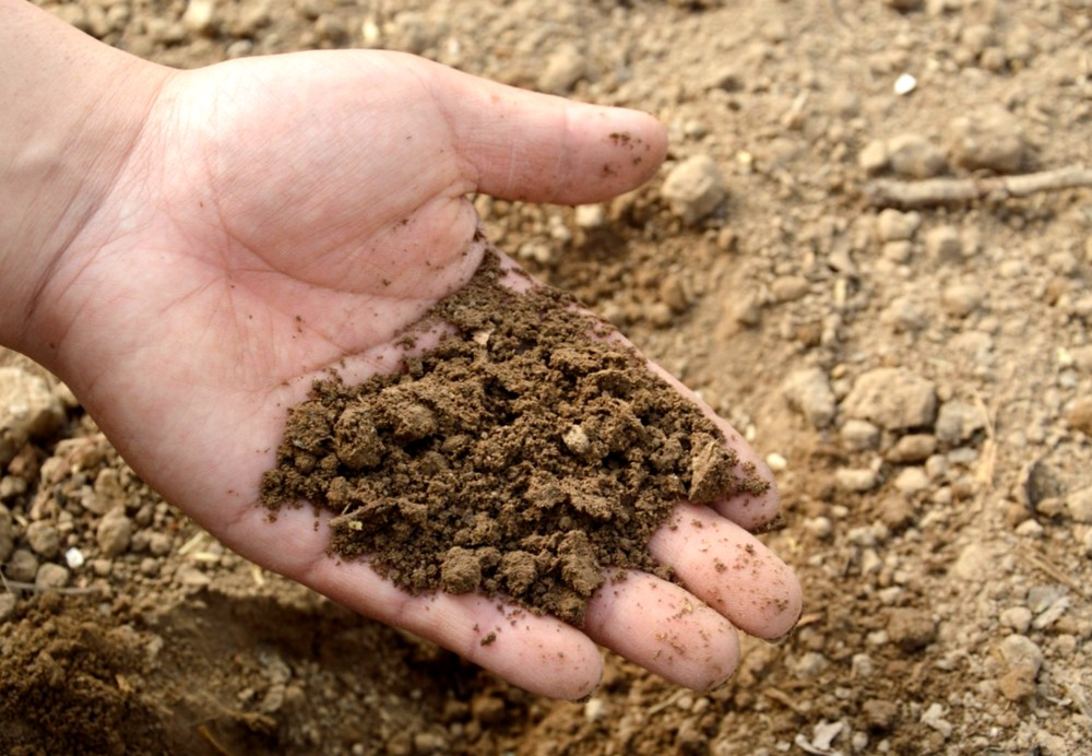 Как определить pH почвы самостоятельно без тестового набора