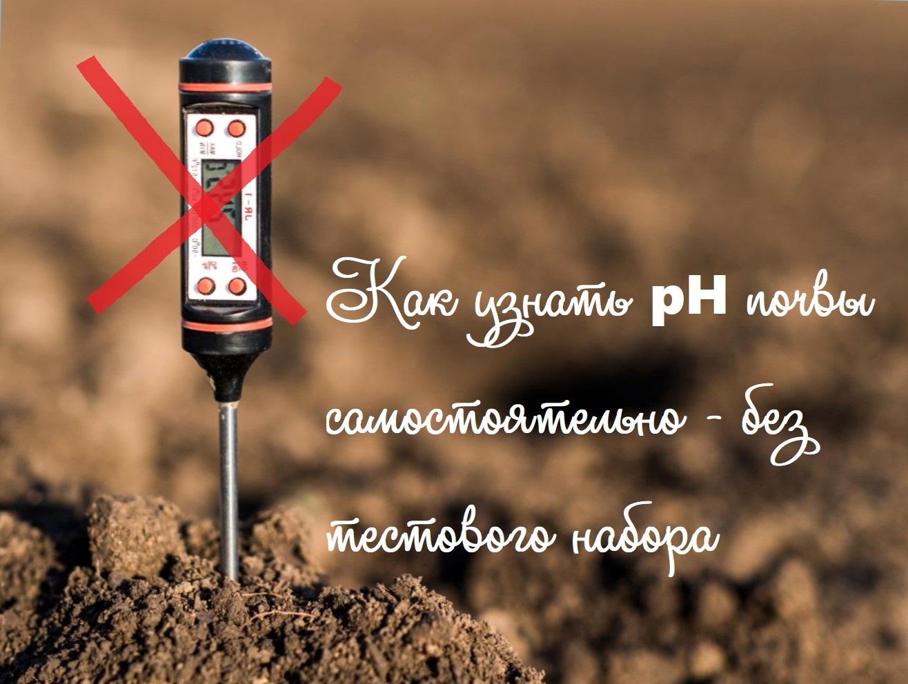 Как узнать pH грунта самостоятельно