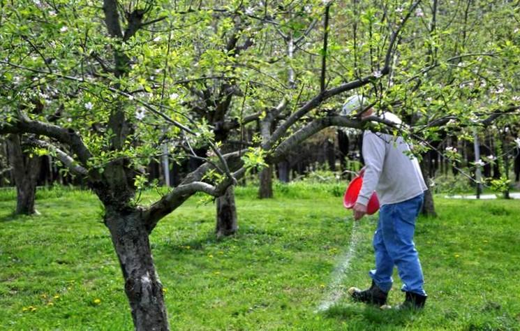 Ошибки при внесении удобрения весной под плодовые деревья